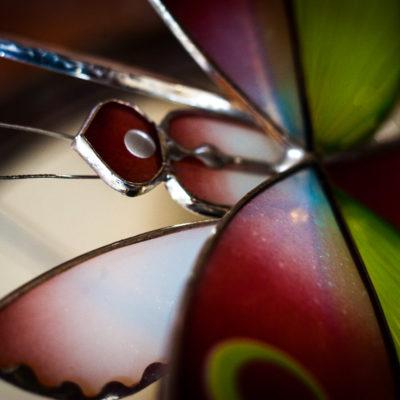 Mante-orchidée 3/Orchid mantis 3