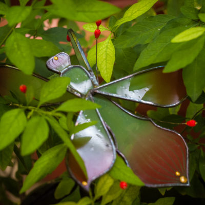 Mante-orchidée 1/Orchid mantis1